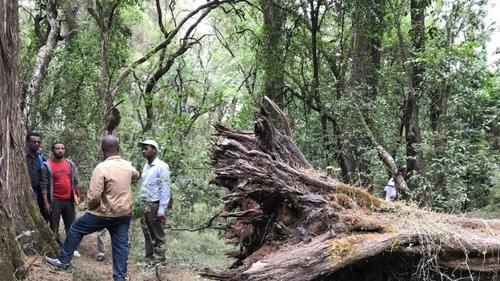 Suba Seta Forest in Oromia region, Ethiopia