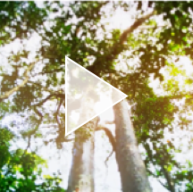 """Sun shining through tall trees, with a transparent """"Play"""" button overlaid"""